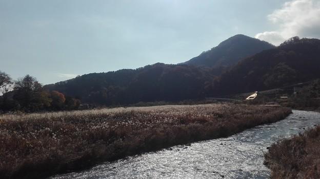写真: 中津川のすすき