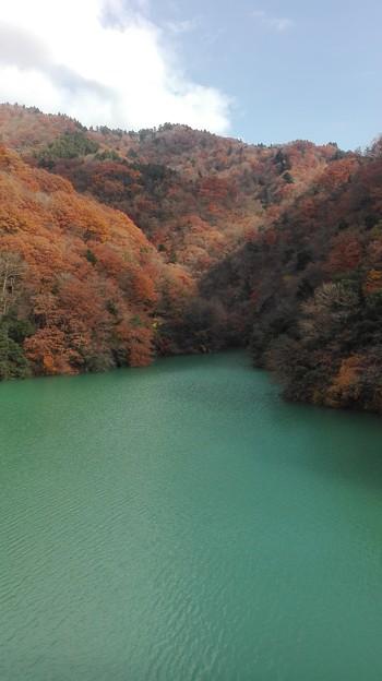 写真: 鮮やかな緑に紅葉
