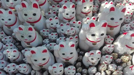 招福猫児4
