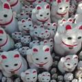 写真: 招福猫児4