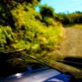 写真: 小さい旅路