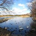冬の昆陽池
