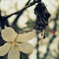 十月桜 ミノムシを添えてw