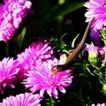 花の上の生き物たちトカゲ