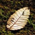 写真: 秋に見た風景 落ち葉とありんこ