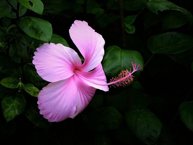 南の島の秋の花