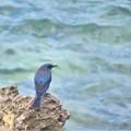 Photos: 南の島で出会った風景 鳥3