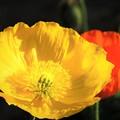 冬に観た花 6