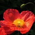 冬に観た花 3