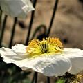 冬に観た花 8