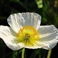 冬に観た花 11