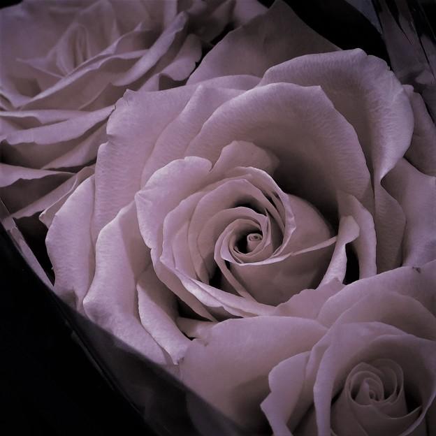 square rose