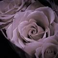 写真: square rose