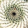 写真: square cactus
