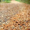 晩秋の峠道にて