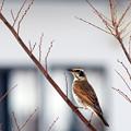 Photos: 冬の居候、来る