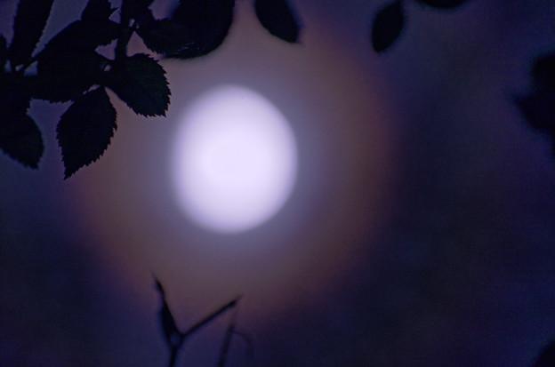 Photos: 朧月夜。