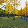 百目木公園の紅葉2014-1 (2)