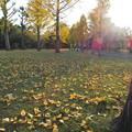 百目木公園の紅葉2014-1 (4)