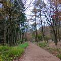 写真: 赤城自然園(1)
