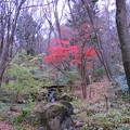 写真: 赤城自然園(2)