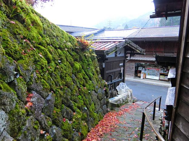 モミジと石垣(2)