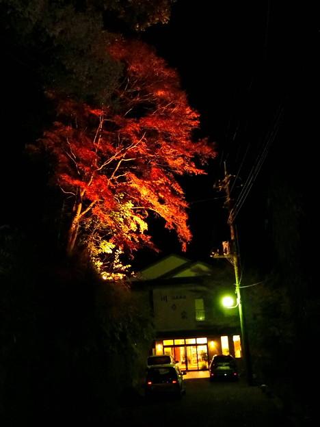 養老温泉ライトアップ(3)