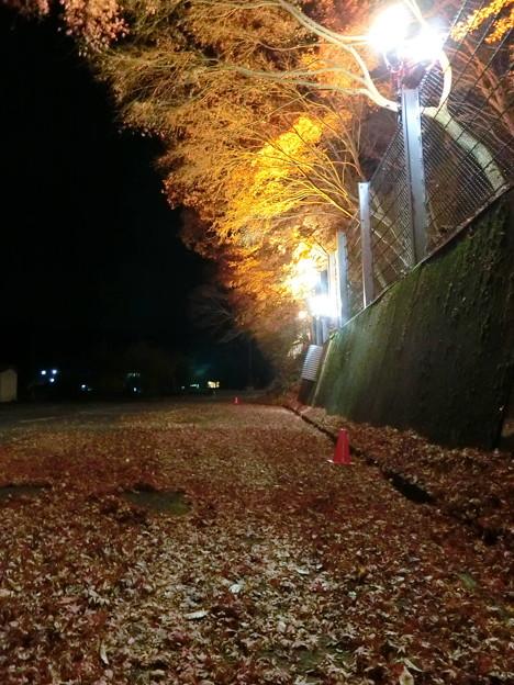 養老温泉ライトアップ(5)