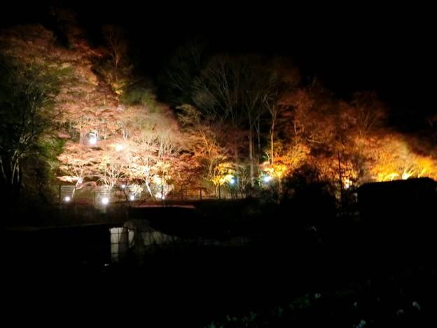 養老温泉ライトアップ(6)