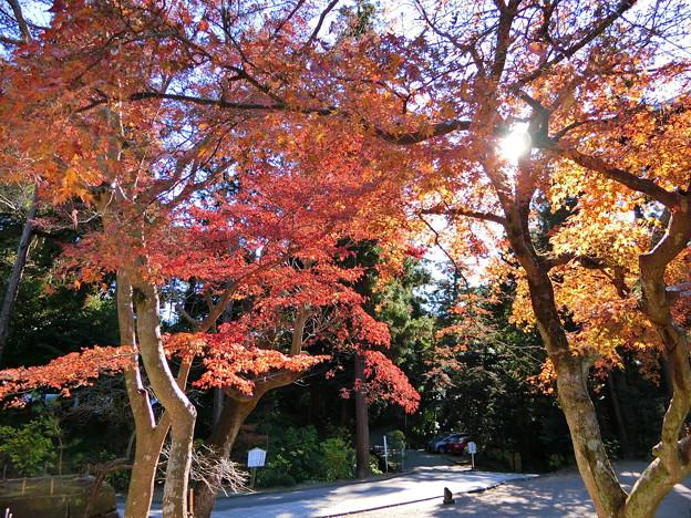 円覚寺境内の紅葉
