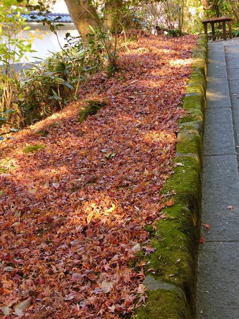 円覚寺境内の紅葉(5)