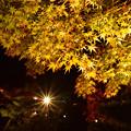 写真: 紅葉-玄宮園-2