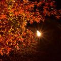写真: 紅葉-玄宮園-3