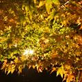 写真: 紅葉-玄宮園-5