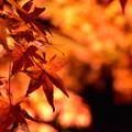 写真: 紅葉-玄宮園-6