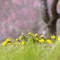 春うらら~