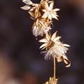 写真: 冬の花