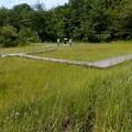 吉賀池湿地
