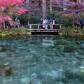 写真: モネの池 (2)