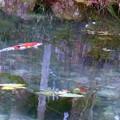 写真: モネの池 (3)