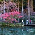 写真: モネの池 (5)