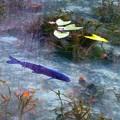 写真: モネの池 (7)