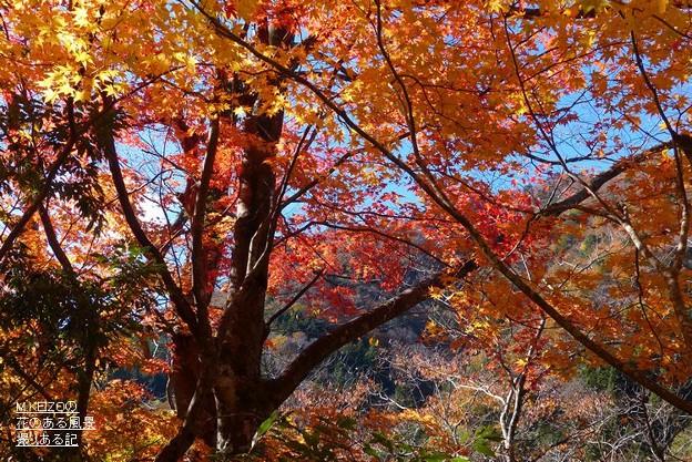 関市杉原 (9)