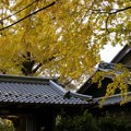 写真: 祖父江イチョウ黄葉祭り (38)