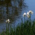 白鳥庭園 (36)