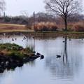 写真: 木曽川水園 (7)