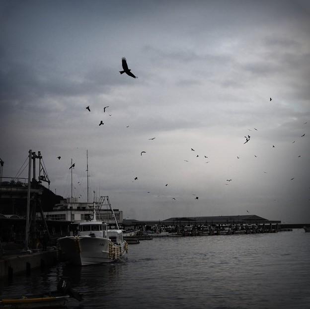 写真: 豊丘漁港