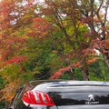 写真: 秋色に誘われて
