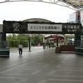 写真: JRA中京8