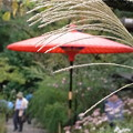 Photos: 和傘のある風景ー秋